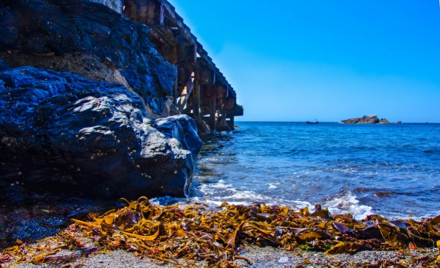 Pictures of Lizard Point
